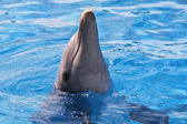 egy ugró delfin kék vízben