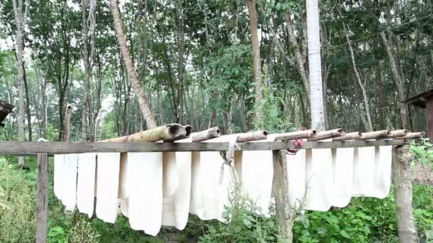 gumové syrové listy visí na bambusové tyče, Thajsko