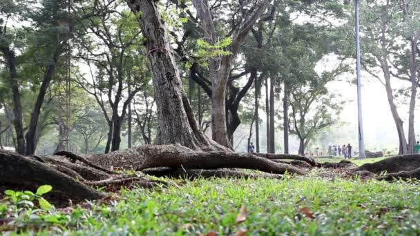 zelené stromy v parku a slunečního záření
