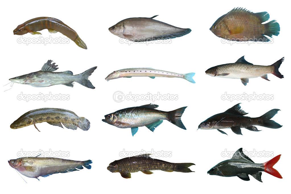 Impostare i pesci d 39 acqua dolce della thailandia foto for Pesci acqua dolce online