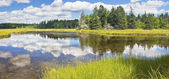 Bass Harbor Marsh In Summer Acadia National Park Maine