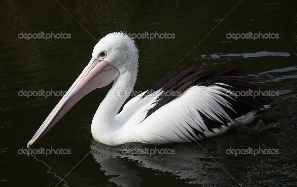 υπέροχο μεγάλο πουλί