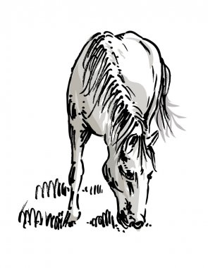 Grazing horse, drawing
