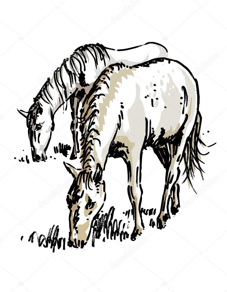cavalos pastando desenho vetor de stock kvocek 27214317
