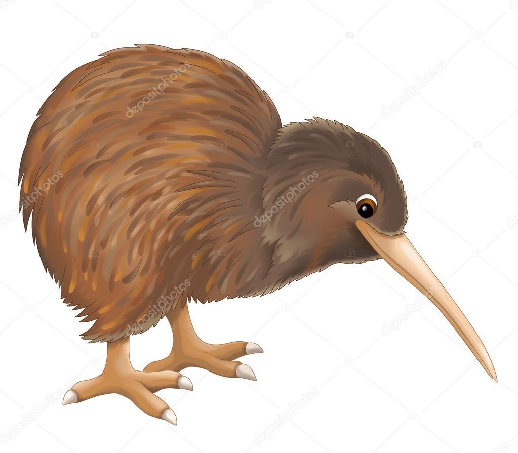 Animado Kiwi Animal Dibujo Pajaro Kivi Foto De Stock