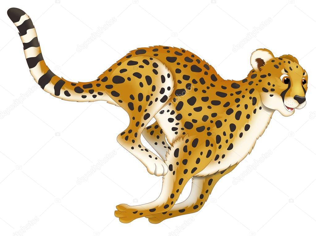 guepardo — Fotos de Stock © agaes8080 #40617923