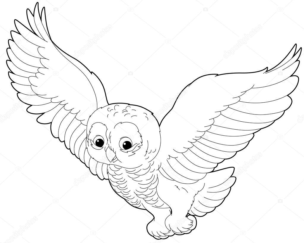Ilustración de búho — Foto de stock © agaes8080 #42653641