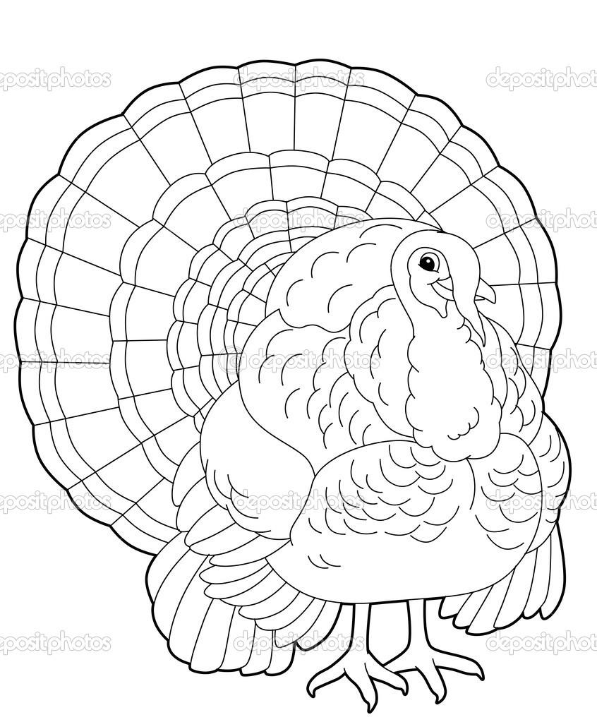 turkey cartoon animal u2014 stock photo agaes8080 42658665