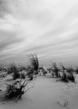 Black and white image of grasses in the sand at Cape May, New Je