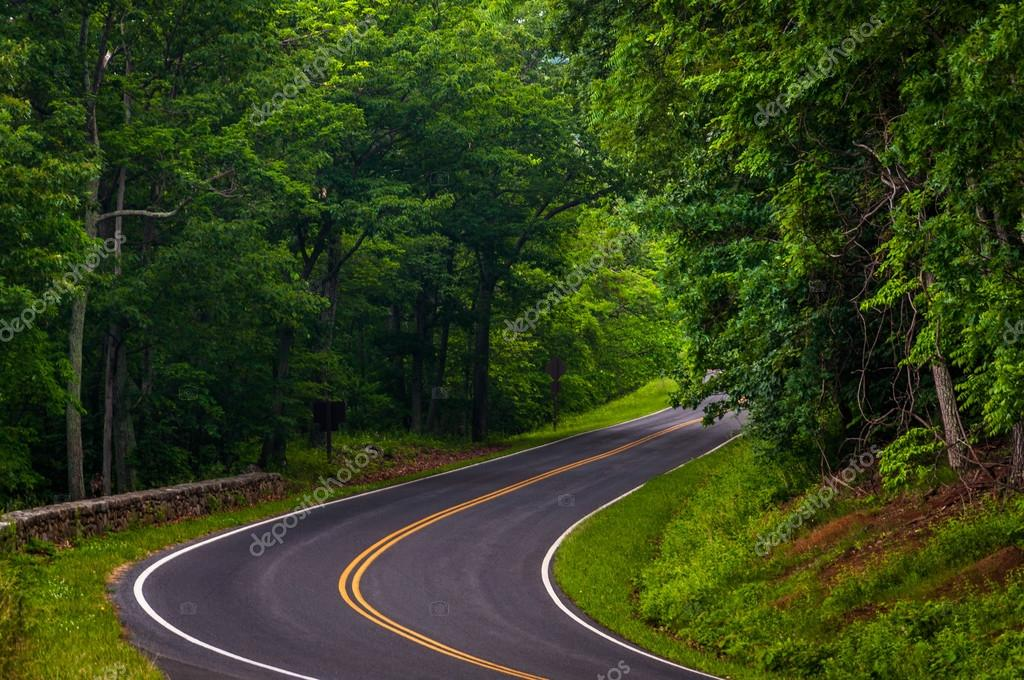 Curve along Skyline Drive in Shenandoah National Park, Virginia.