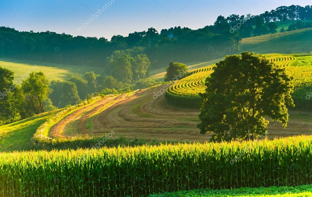 Farm fields and tree on a hillside in rural York County, Pennsyl