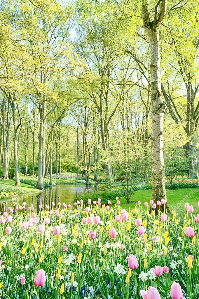 Sunny garden with trees and flowers — Stock Photo © ptnphoto #28673281