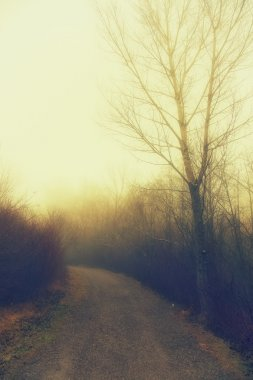 Misty morning in the park