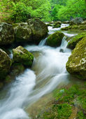 flusso nei boschi