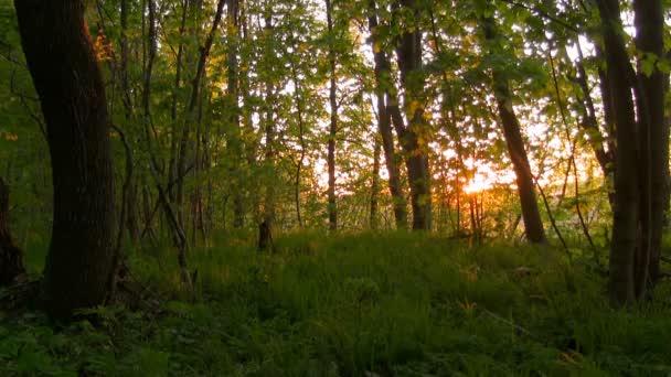 erdő napkeltekor.