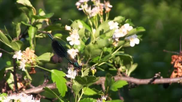vážka na květ