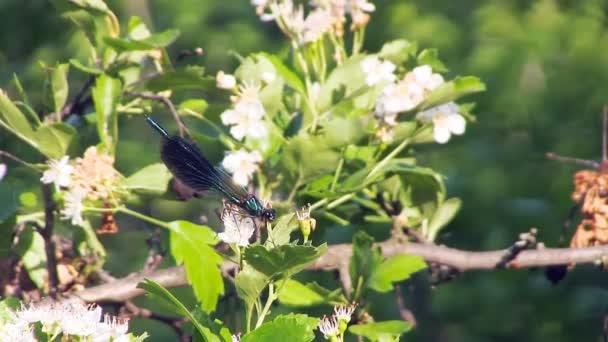 Szitakötő a virágon.