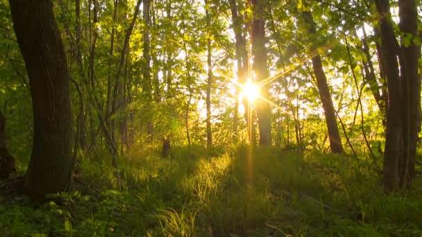 Les při západu slunce.