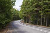 strada asfaltata nel bosco