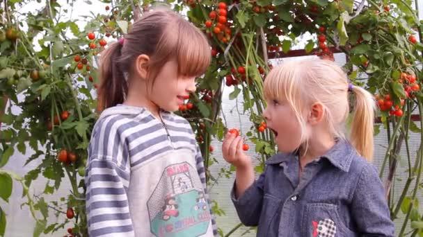 dvě dívky jíst rajčata v zahradě