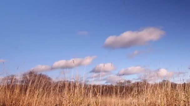 Dry grass, forest, on the background of blue sky, clouds