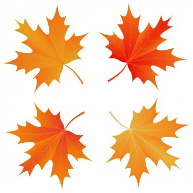 set of autumn maple leaf