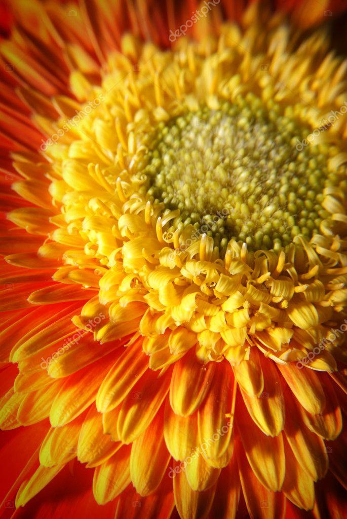 Detail of orange flower - macro
