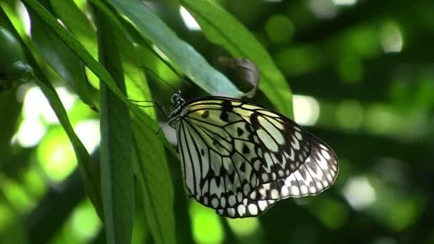 strom víla motýl na zelený list