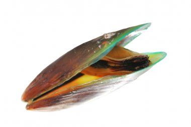 Green mussel on white background.