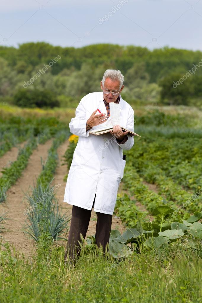 Agronomist in vegetable garden