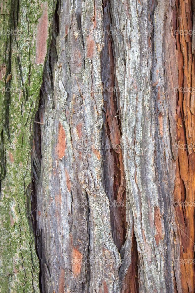 Teakbaum rinde  rinde texturen — Stockfoto © kataklinger #37092097