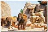 slon (sloni) v přírodním parku. (Španělsko, Valencie)