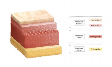 Layers Of Human Skin - German Labeling