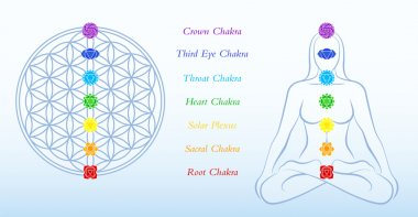 Flower of Life Description Chakras Woman