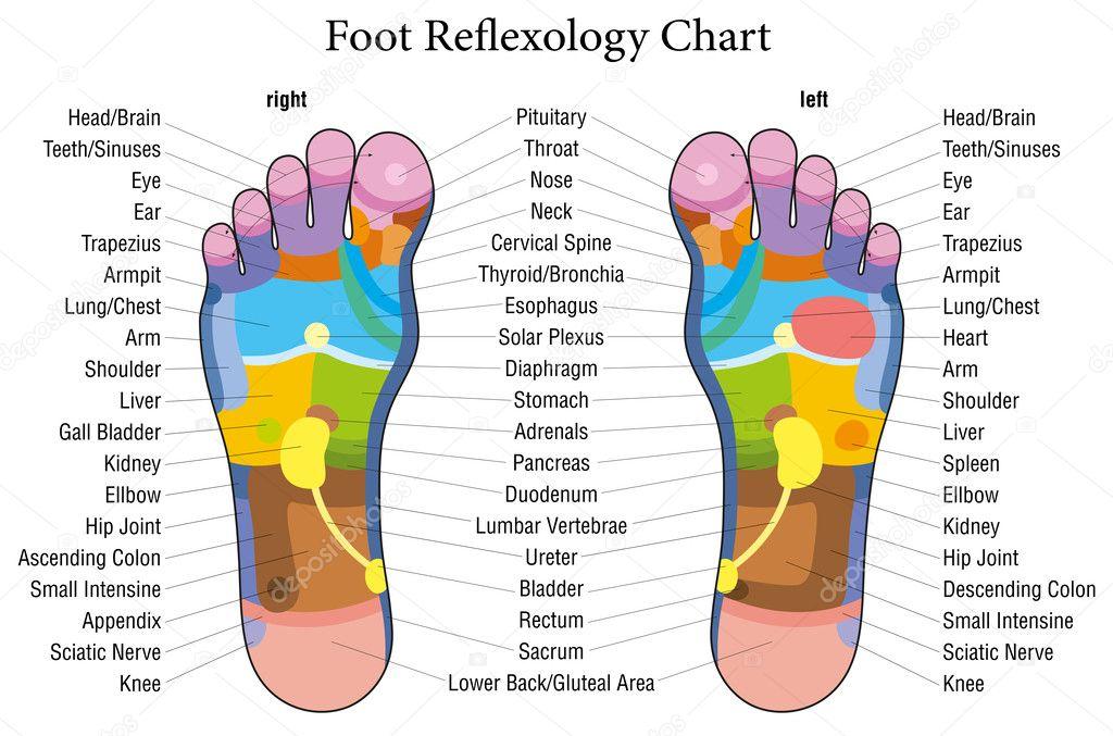 Fuß-Reflexzonenmassage Diagramm Beschreibung — Stockvektor © Furian ...