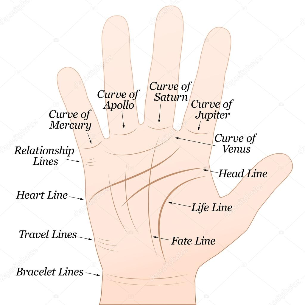 Guessing on the hands (palmistry): the value of lines 18