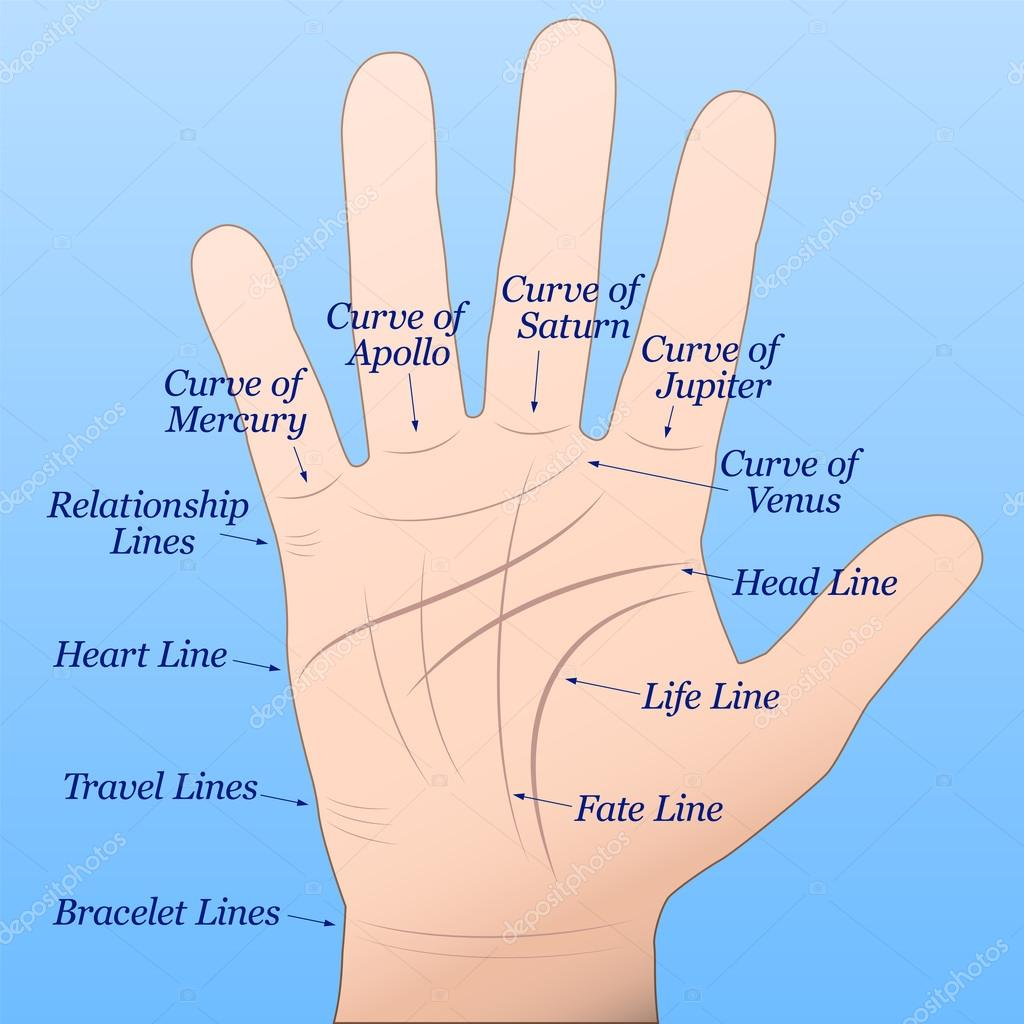 Guessing on the hands (palmistry): the value of lines 77