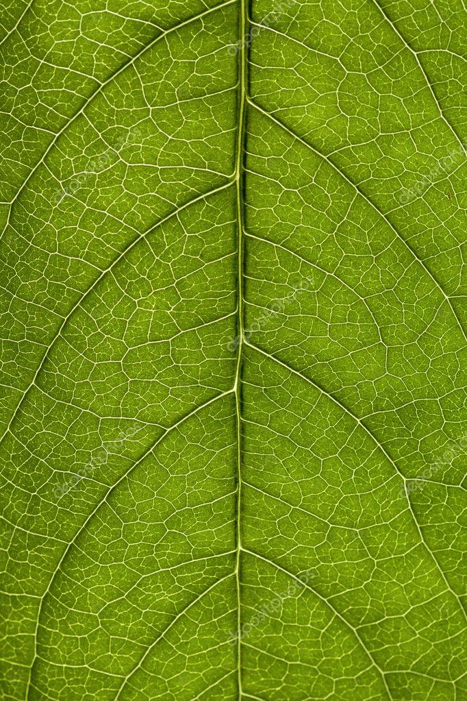 Leaf macro