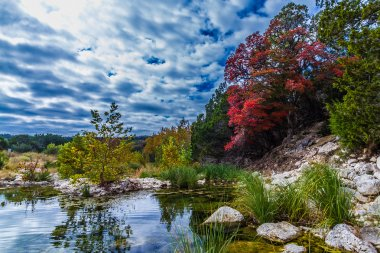 Bright Red Fall Foliage at Stream in Lost Maples State Park in Texas.