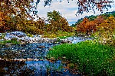 Stunning Fall Colors of Texas Cypress Trees Surrounding the Crystal Clear Texas Hill Country Pedernales Rivers.