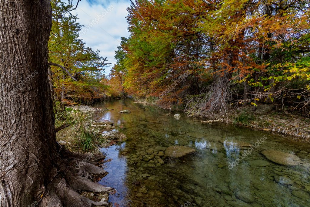 Cyprus Trees with Stunning Fall Color Lining a Crystal Clear Texas Hill Country Stream.
