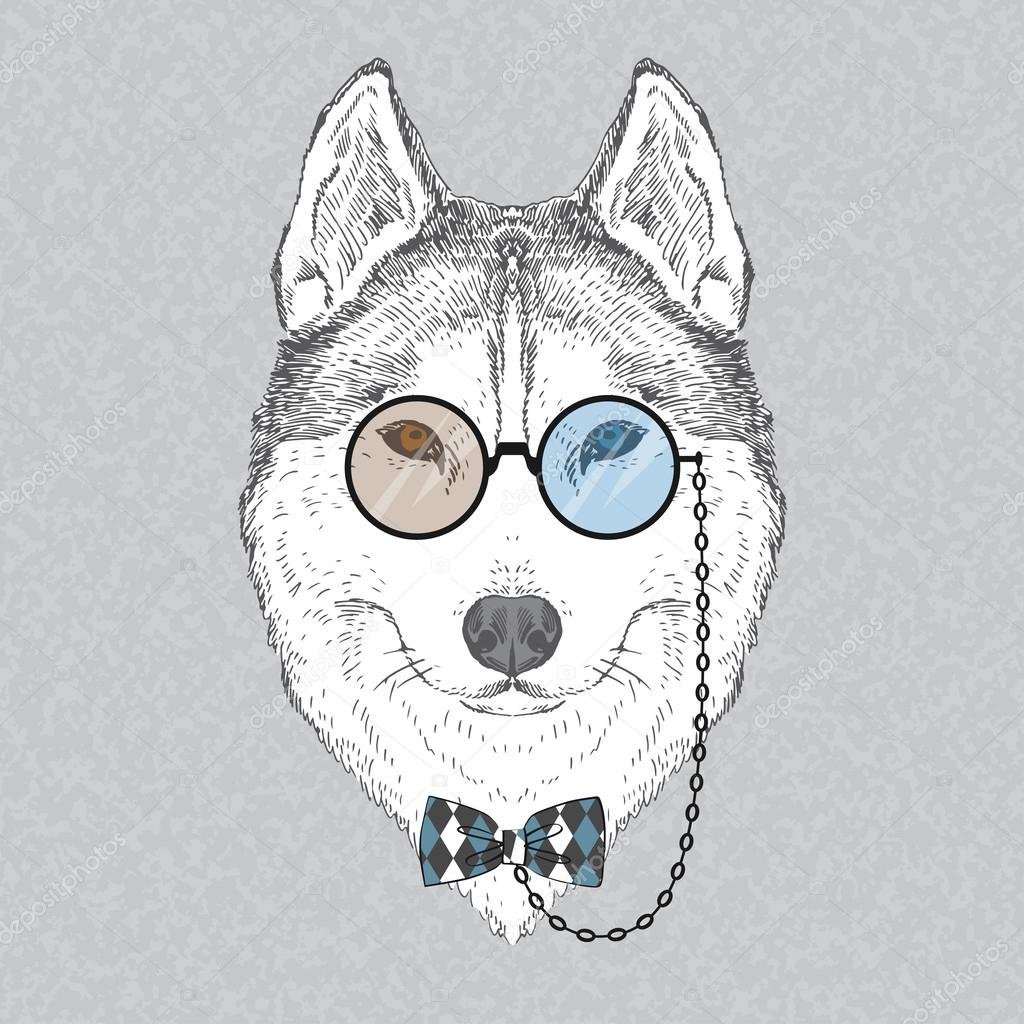 Fashion Portrait of Husky