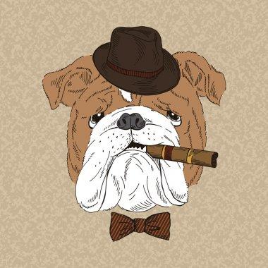 English Bulldog with cigar