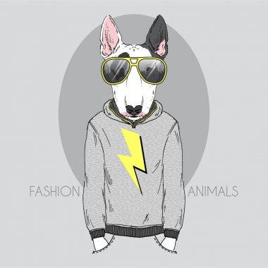 Bull terrier in hoodie and sunglasses