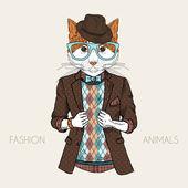 Fényképek öltözött, macska