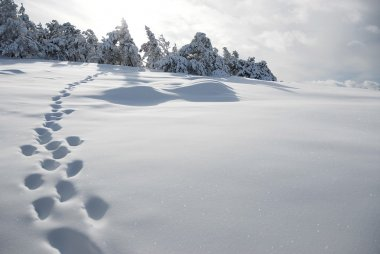 Lonely footprints on a snowy slope, the Crimean Mountains, Ukraine.