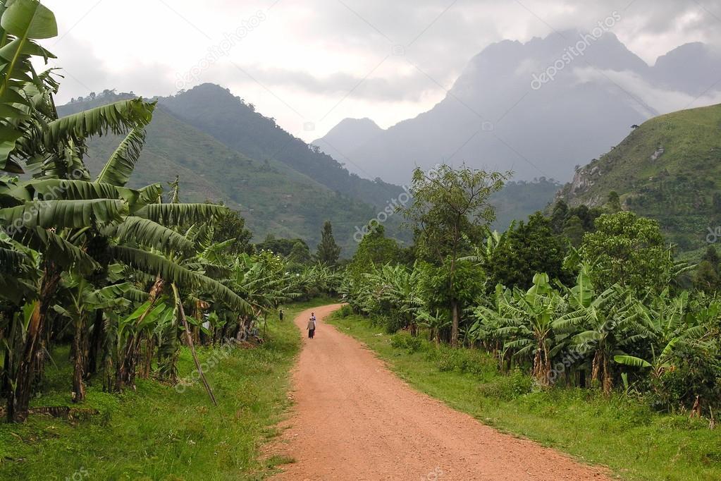 Road landscape with Ruwenzori Mountains, Uganda.
