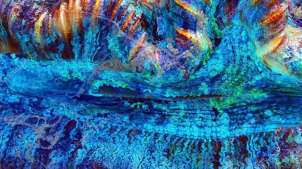 Coral Abstract Macro