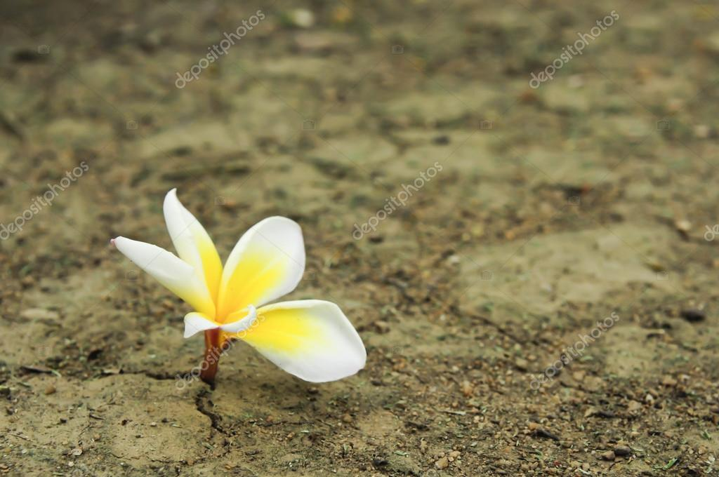 Flower in dried cracked soil