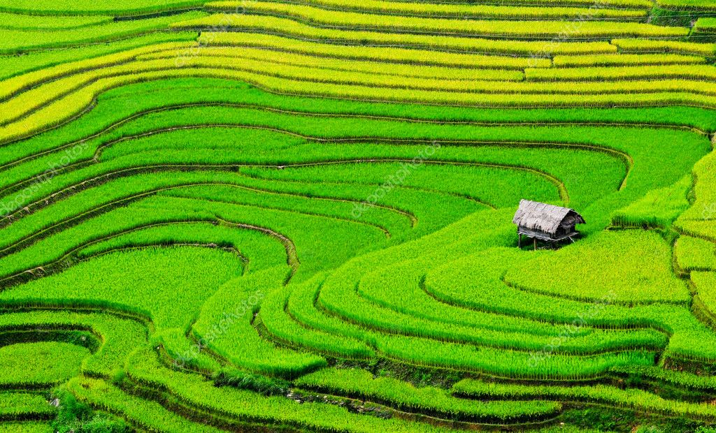 Beautiful terrace rice field with small houses in northwest Vietnam.